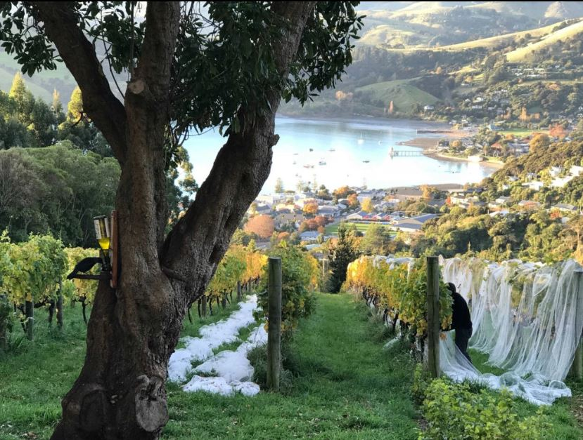 akaroa vineyard and wine tasting